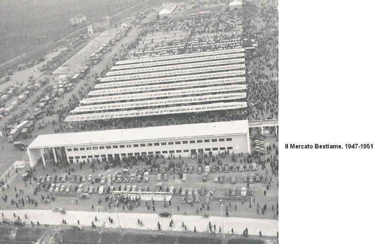 Mercato bestiame 1947-51