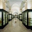 Musei civici - il salone archeologico
