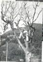Fiumalbo, Parole sui muri, 1967 (2).jpg