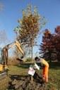 Parco Ferrari, la ripiantumazione degli alberi dopo il Modena Park