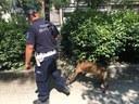 Il cane poliziotto Axel in azione