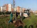 """Parco Chinnici, 35 nuove piante con """"Più alberi in città"""""""