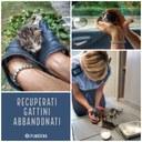 Gattini salvati dalla Municipale