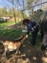 Operatrice della Polizia municipale nell'area dove sono state raccolte le capre