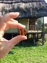 Magia dell'ambra alla Terramara di Montale.jpg