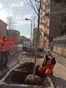 via De' Fogliani, messi a dimora nuovi alberi